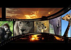 複数の動物の写真